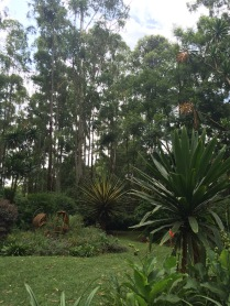Enjoying the rainforest in Karen (Nairobi)