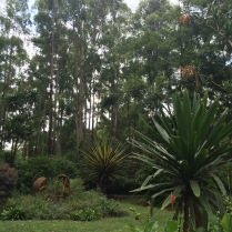 Enjoying the rainforest in Karen (Nairobi)