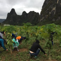 Weeding papaya plantations as part of our community service